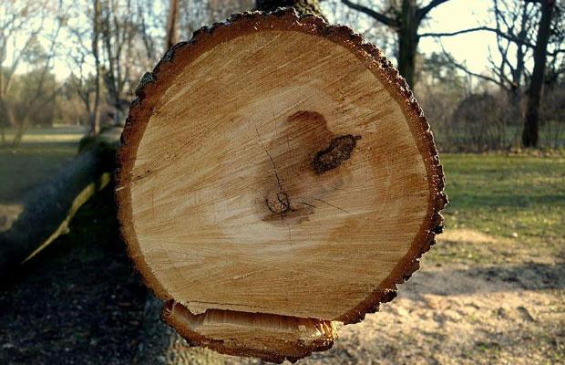 Bồn tắm gỗ tại Trống Chí Mạnh được tạo ra như thế nào?