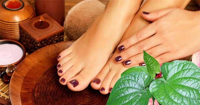 Ngâm chân với nước ấm và lá lốt