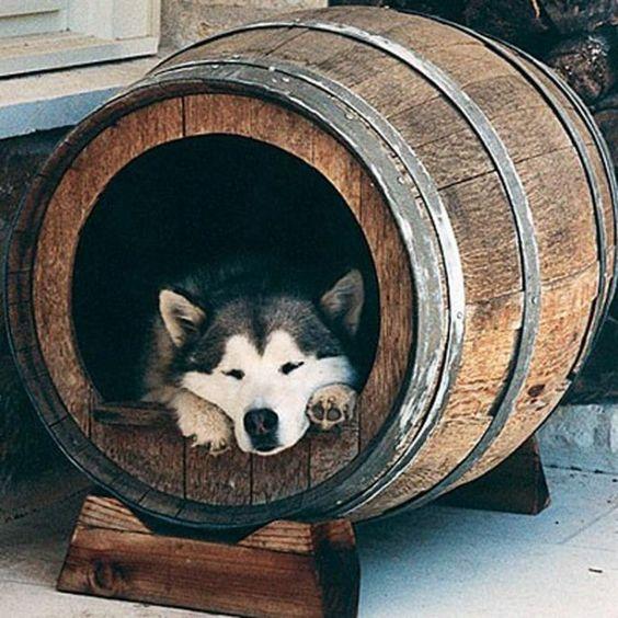 làm nhà cho chó từ thùng gỗ sồi ngâm rượu cũ